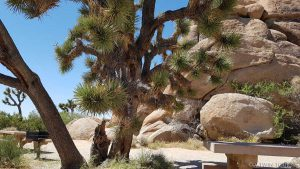 Joshua Tree National Parc